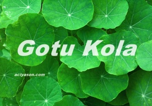 Gotu-Kola-leaves